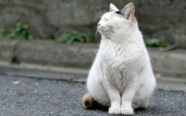 pisic obez 1
