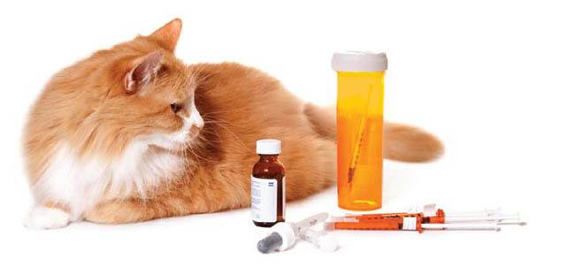 diabet pisici 1